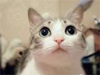 起司猫的真实版,好口爱啊~